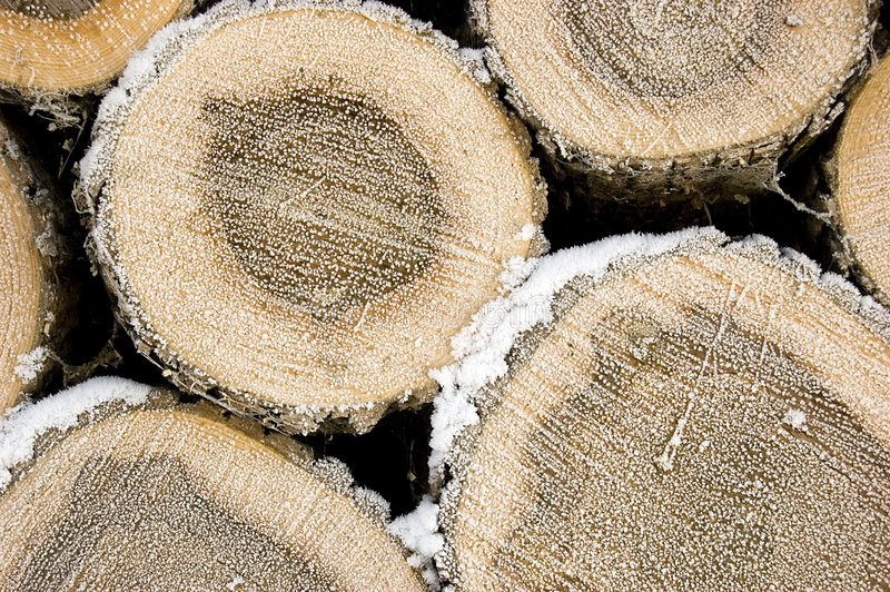 Download Pile of frozen logs stock image. Image of rough, frozen - 7668077