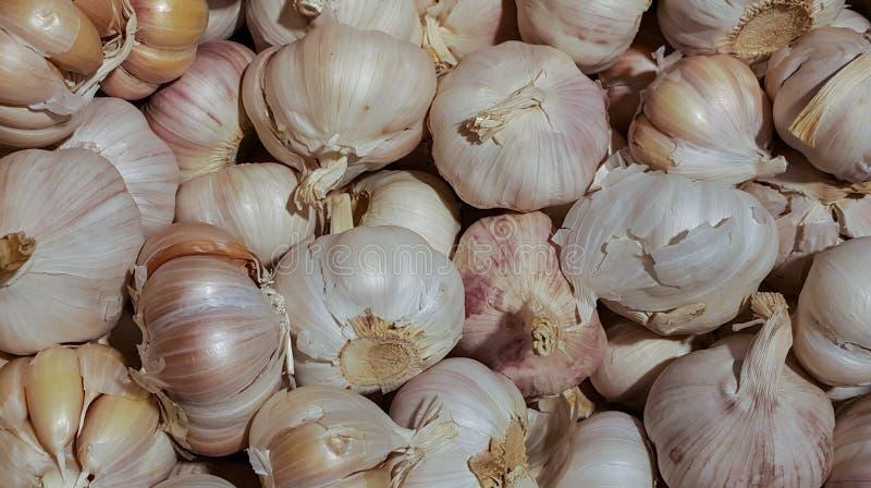 Pile of garlic bulbs. stock photos