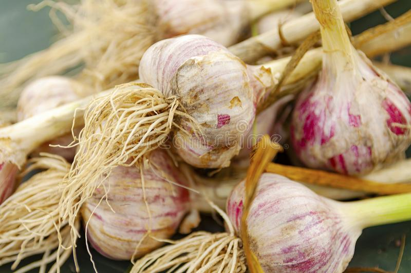 Pile of garlic view from the top stock images