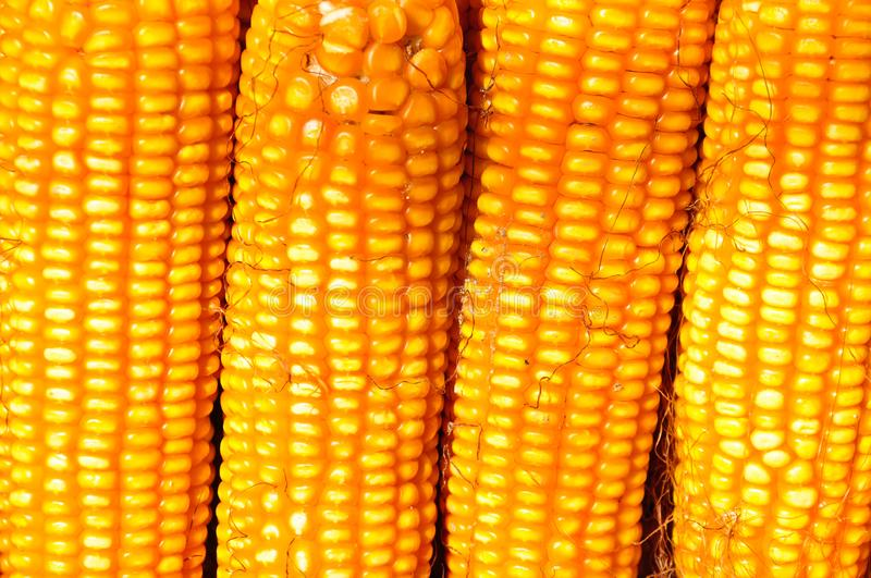 A pile of golden corn stock images