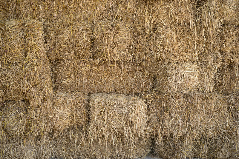 Pile of Hay or straw. royalty free stock photography
