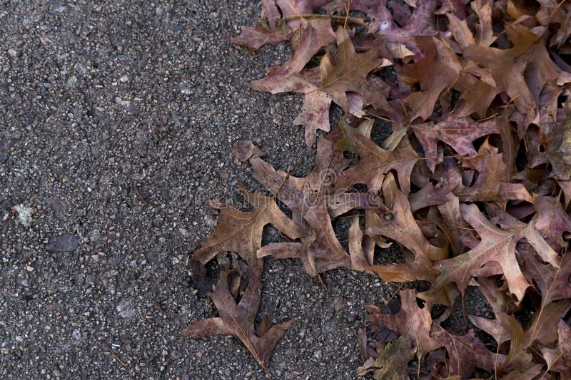 Pile of leaves on the ground background stock photos