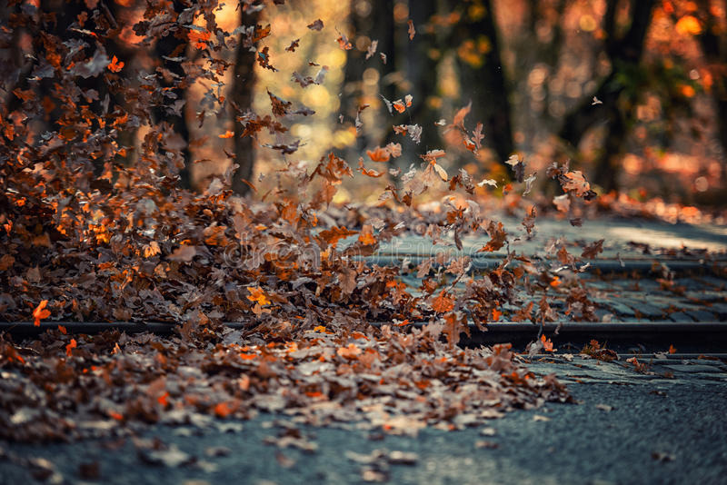 Pile of leaves high wind stock photo