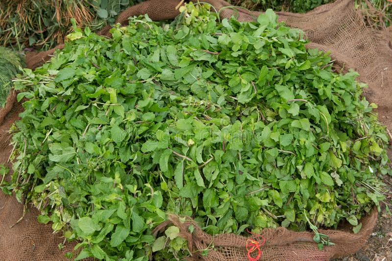 Pile of lemon balm at an indian roadside food market. A pile of lemon balmon a burlap bag at an indian roadside food market in the south of india stock images