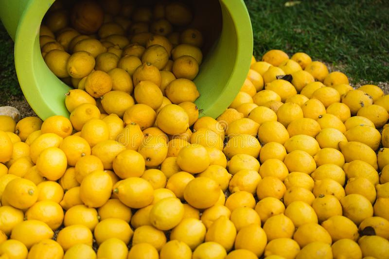 Pile of lemons spilling from a vase, decoration in Menton, the city of Lemons, France. Picture take during the Lemon Festival 2018, Cote d`Azur, France, Europe royalty free stock image