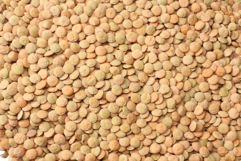 Pile lentils background. Pile lentils texture. Top view stock photo