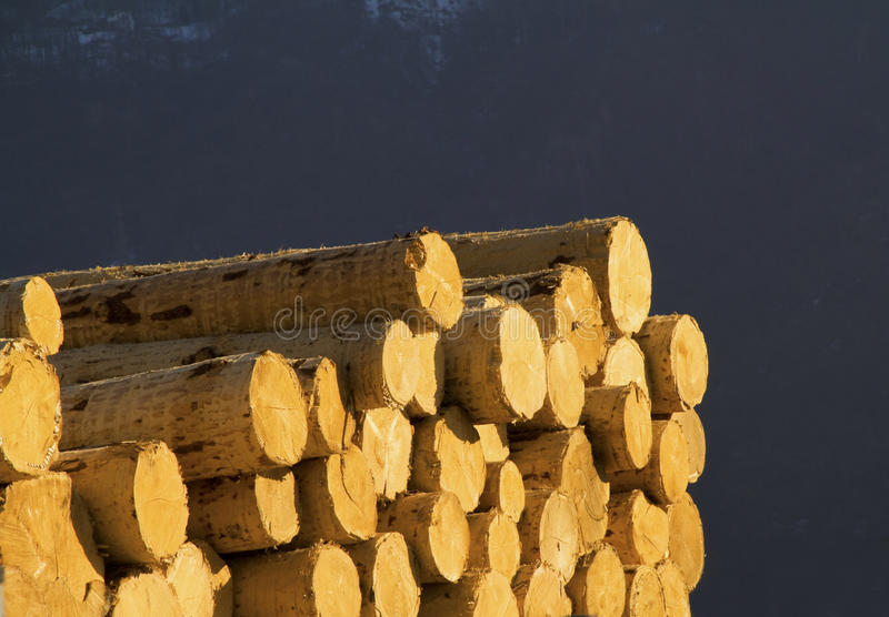 Download Pile of logs stock photo. Image of blue, trees, carpentry - 13050156