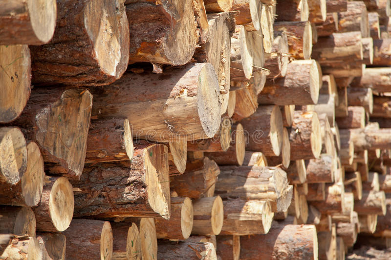 Pile Of Logs. Huge pile of cut logs royalty free stock images
