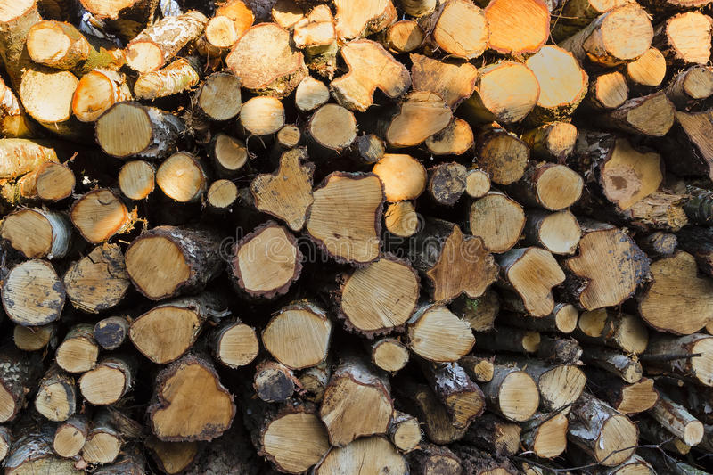 Pile of logs. Landscape colour photo of a huge pile of cut tree trunks stacked high royalty free stock image