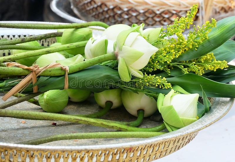 Pile of Lotus Flowers on Pedestal Tray royalty free stock images