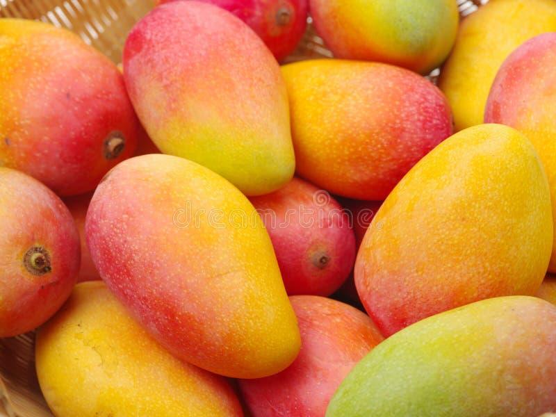 Pile mûre de mangue dans le panier photographie stock