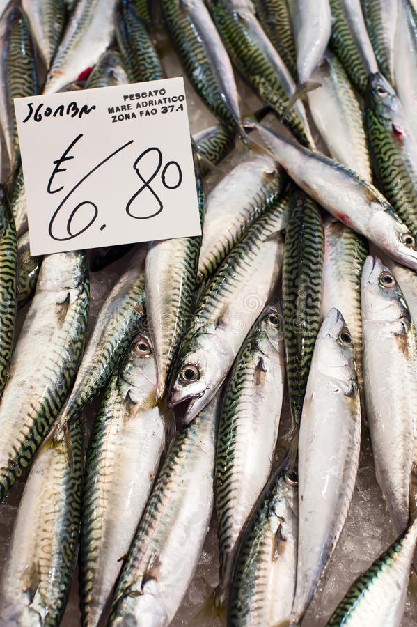 Pile of mackerel stock image image of mediterranean for Fish market prices