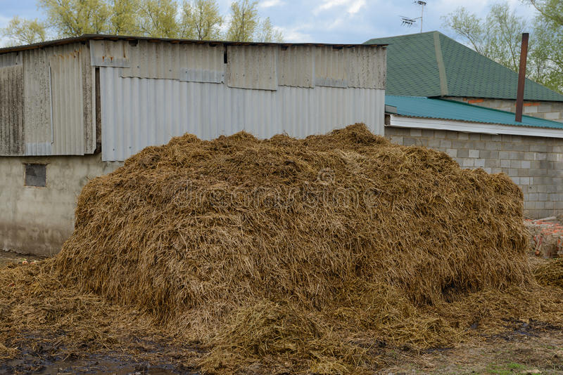 Pile of manure royalty free stock images
