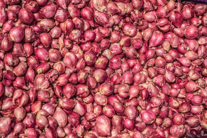 Pile of many fresh organic shallot onoins in the farmers market for sale from field for background. Close up, selective. Pile of many fresh organic shallot royalty free stock image