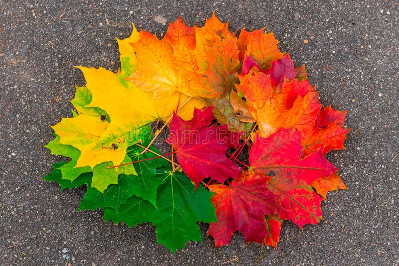 Pile of maple leaves on the asphalt close-up. In autumn stock photos