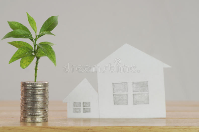 pile of money, coins with plant royalty free stock photography