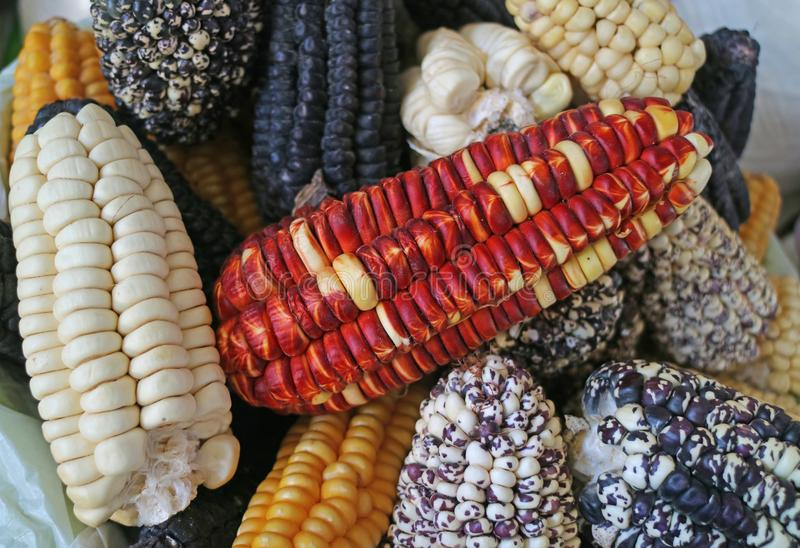 Pile of multi-color Peruvian corns for sale in the local market of Cusco, Peru. Texture Background royalty free stock image
