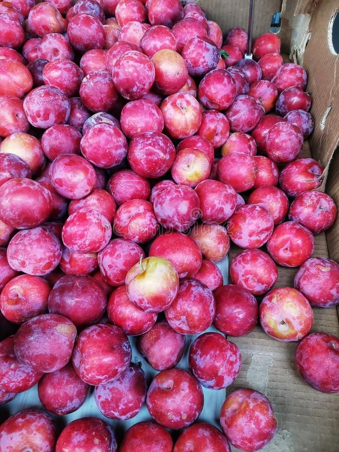 A pile of nectarines in a carton. Closeup of a pile of fresh nectarines in a carton for people to choose royalty free stock photo