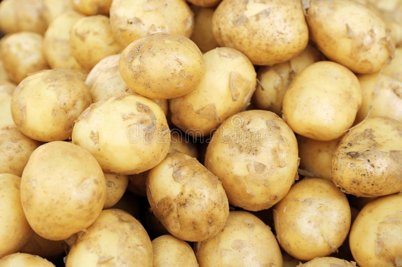 Pile of new potatoes,. Close up royalty free stock photography