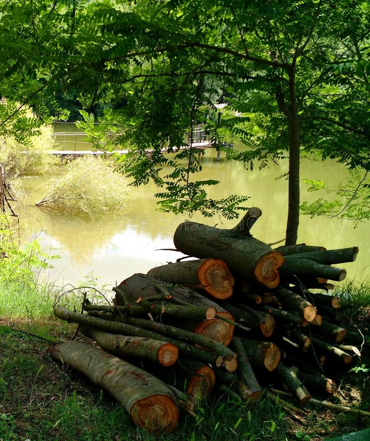 Free Pile Of Logs By A Pond Stock Image - 132273121