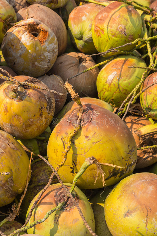 Pile of old coconuts on the ground royalty free stock photos