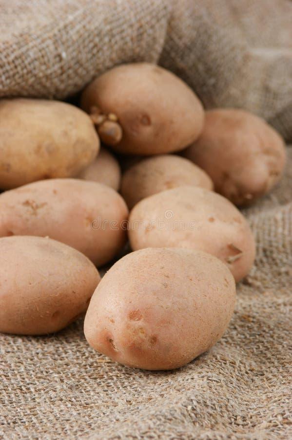 pile potatisar arkivfoto