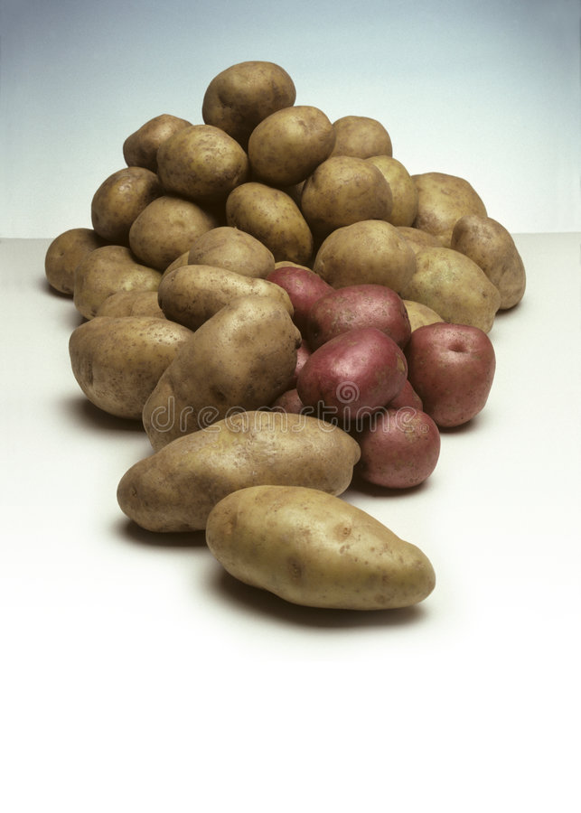 Pile of Potatoes. A pile of various types of potatoes, including Russert and Idaho potatoes royalty free stock image