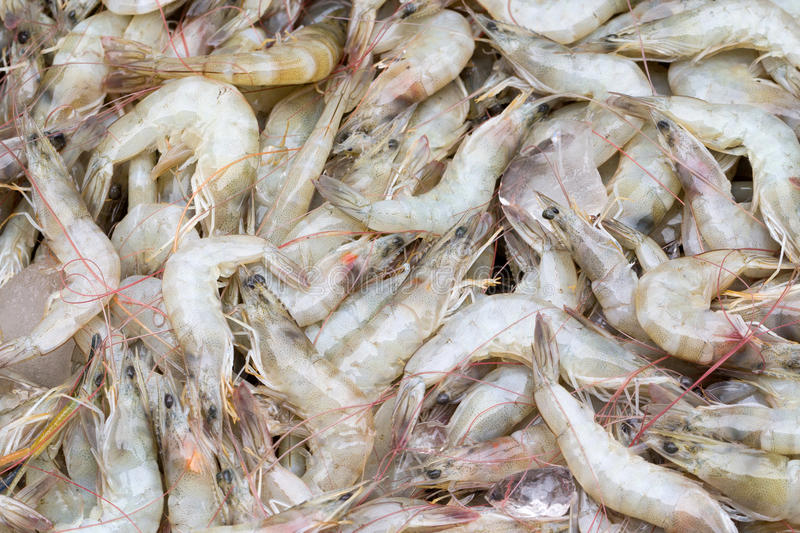 Pile of prawns. Pile of a lot fresh and uncooked prawns royalty free stock images