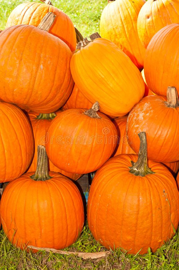 Pile of pumpkins stock photography