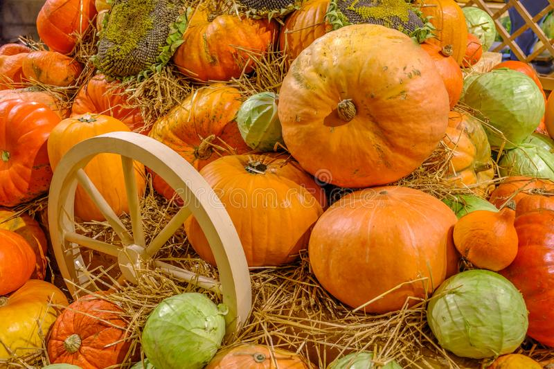 Pile of pumpkins on hay. After autumn harvest in waiting for halloween holiday royalty free stock images