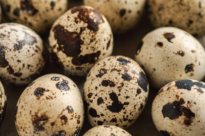 Pile of quail eggs close-up macro shot. Selective focus stock image
