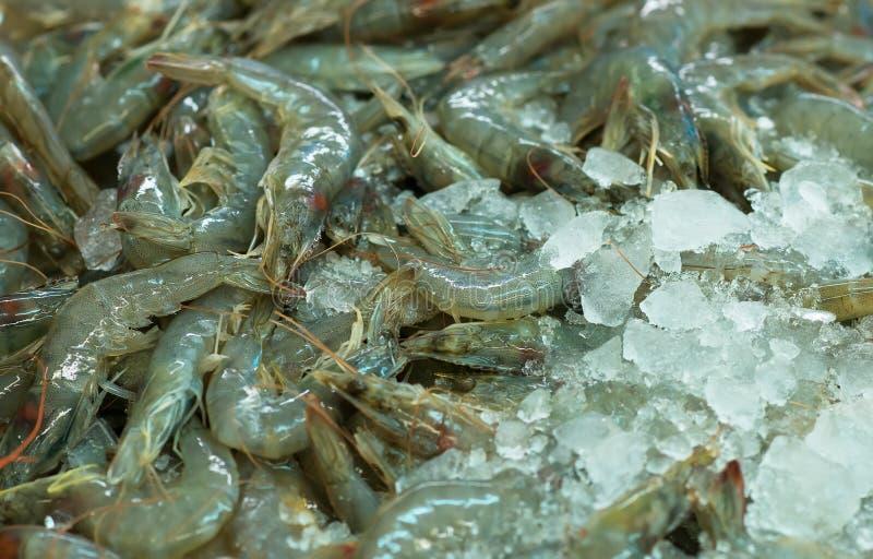 Pile of raw langoustines. stock image