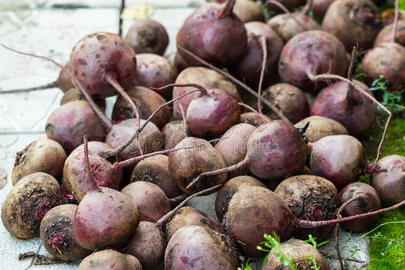 Pile of red beet roots outdoors. A bunch of red beets without tops outdoors stock photos