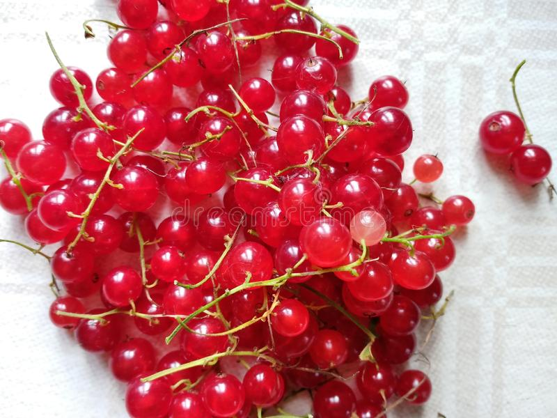 Pile of red currents. Pile of fresh and shiny red currents on a tablecloth stock images