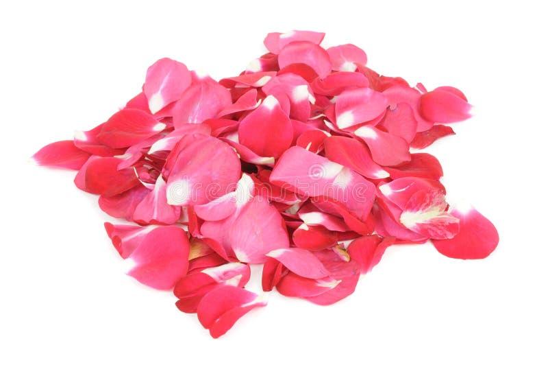 Pile of Red Rose Petals