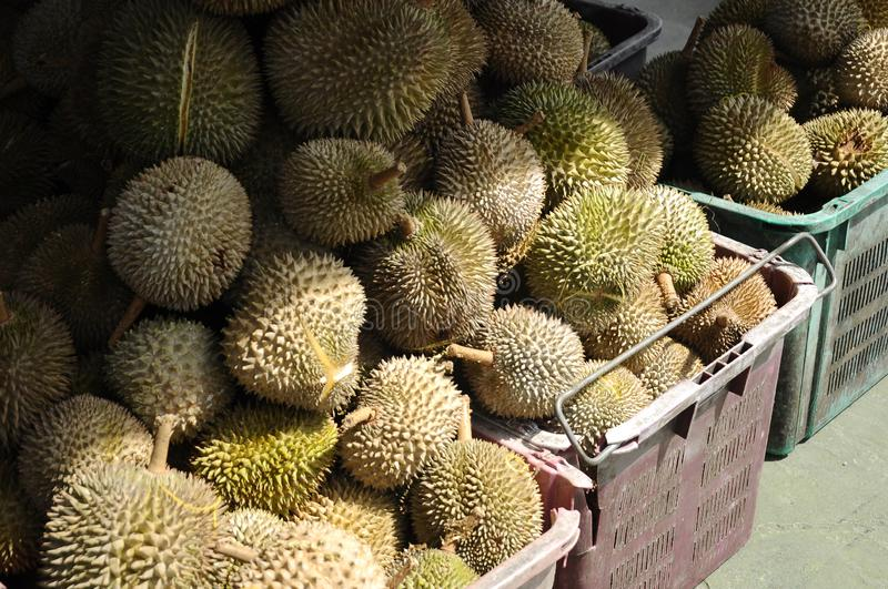 Pile of durian fruit for sale. Pile of ripe durian fruit in basket and ready to sale stock images
