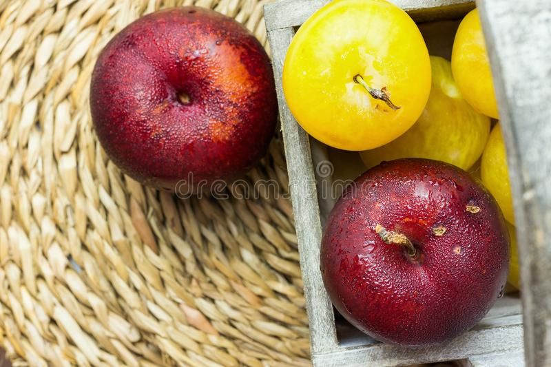 Pile of ripe juicy organic yellow red plums in wooden garden box on rattan coaster. Autumn Fall Produce. Vivid Colors. Food Poster. Pile of ripe juicy organic stock image