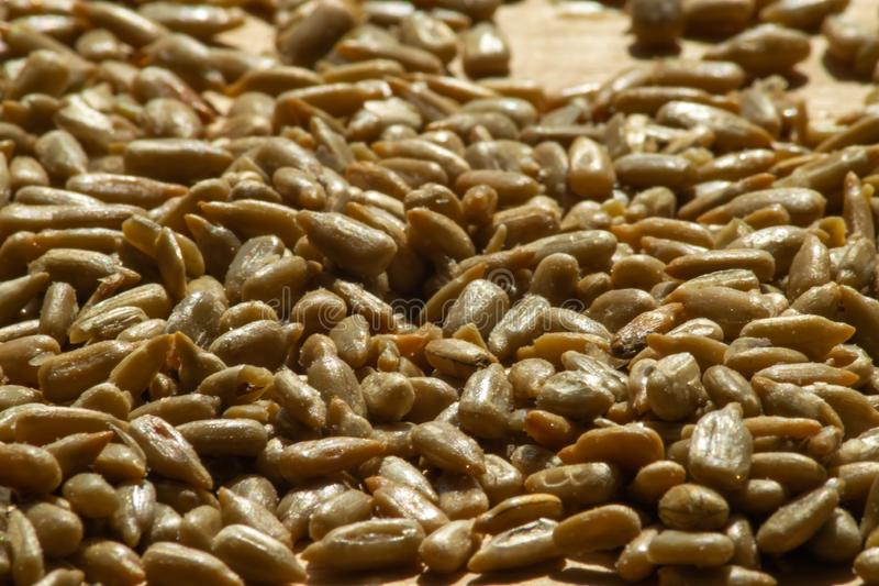 Pile of roasted and salted sunflower seeds stock images