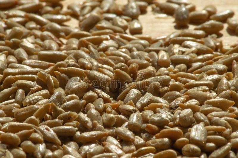 Pile of roasted and salted sunflower seeds stock photography
