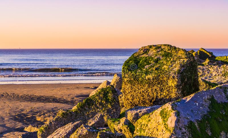 Pile of rocks covered in sea weed, blue ocean with waves and colorful sky during sunset. the beach of Blankenberge, Belgium stock photo