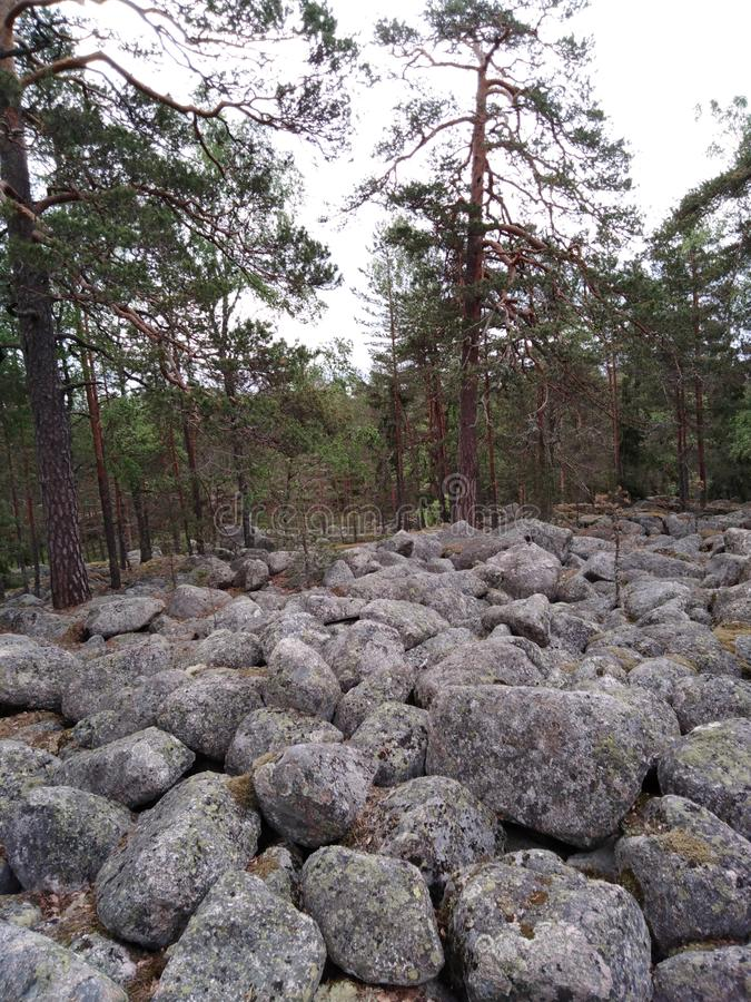 Pile of rocks In forest stock images