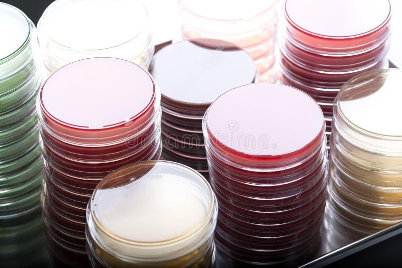 Pile rosse e gialle delle capsule di Petri nel laboratorio di microbiologia sui precedenti del laboratorio di batteriologia fotografia stock libera da diritti