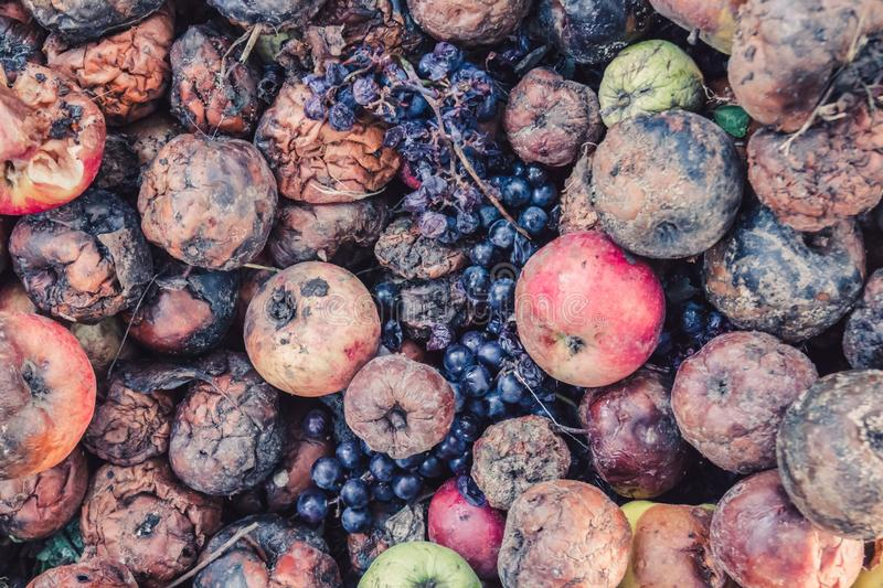 Pile of rotten apples and grapes, the concept of a spoiled harvest royalty free stock photo