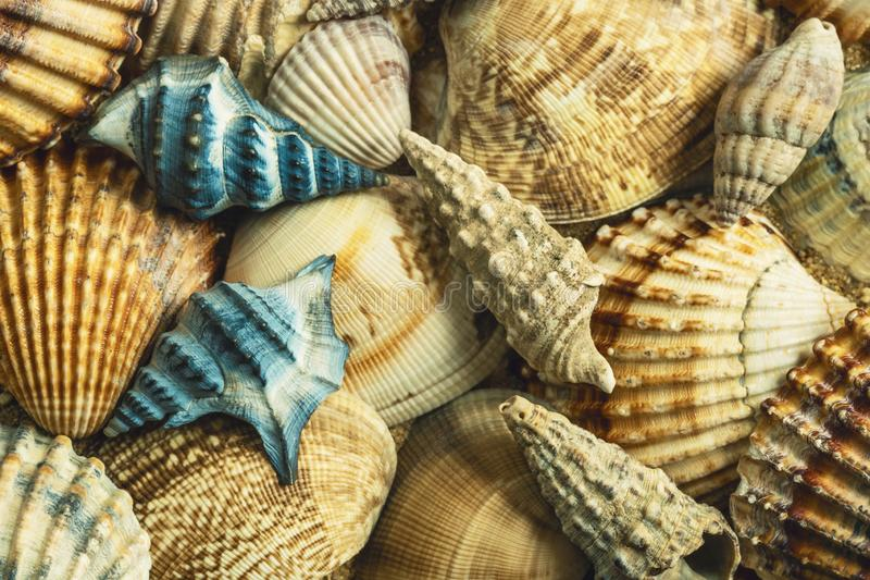 Sea shells. Blue with orange. stock photo