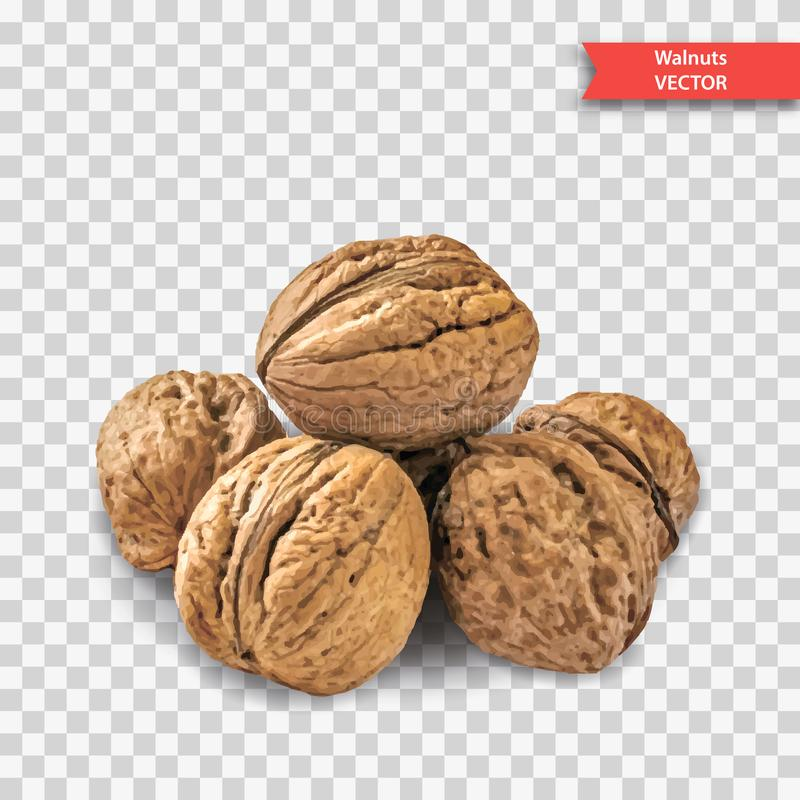 A pile of several walnuts on a transparent background. Object Decor for New Year or Christmas. Realistic Vector Illustration stock image