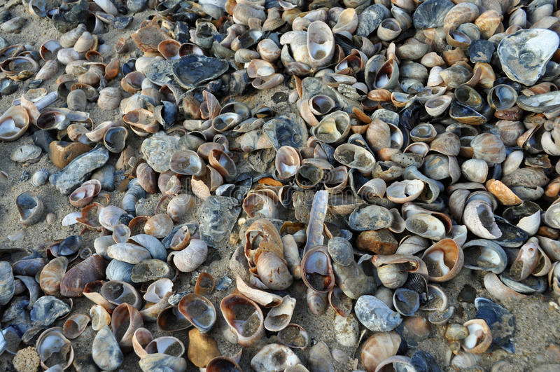 Download Pile of shells on beach stock photo. Image of nobody - 37737504