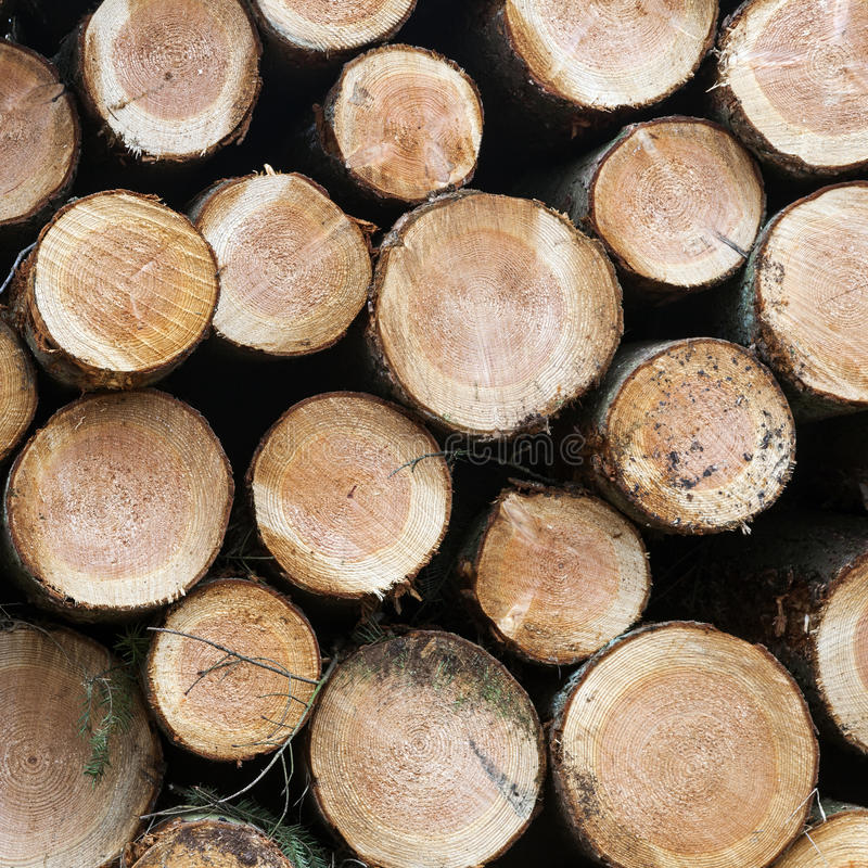 Pile of small cut trunks of spruce tree wood stock photo