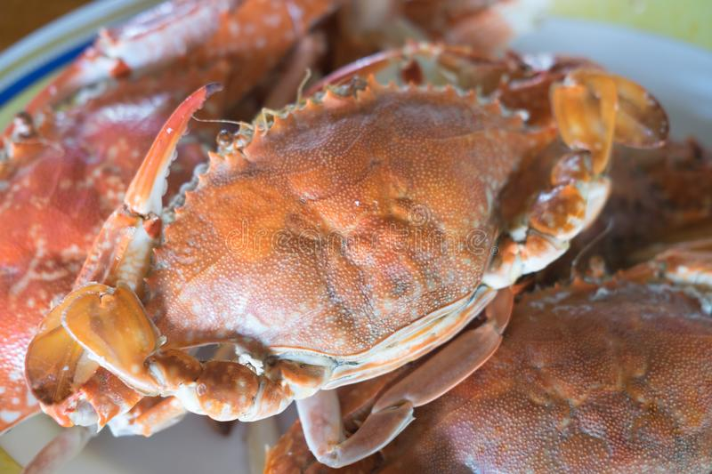 Pile of steamed crab stock image