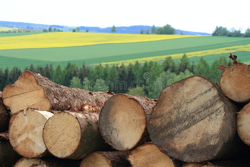 Pile of a timber logs in detail. Beautiful rural area with rape and corn fields at the back stock photos