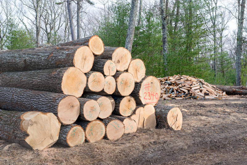 Pile of Timber ready for the Mill with a pile of Firewood. royalty free stock photo